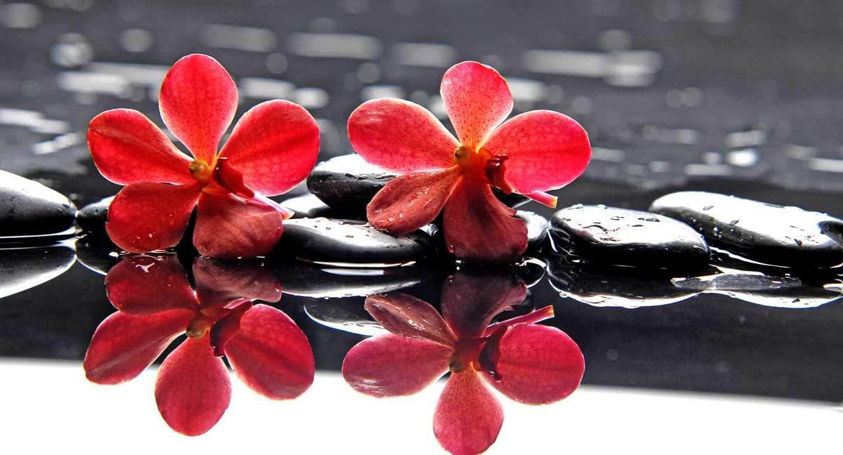 Zwei rote Blüten auf schwarzen Steinen am Wasser